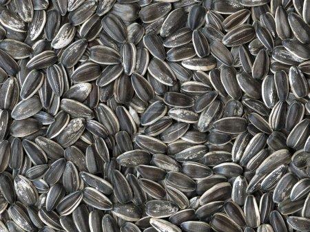 Photo pour Texture prononcée des graines de tournesol, la haute précision des détails - image libre de droit