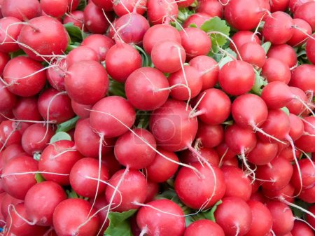 Photo for Red fresh vitamin radish is a healthy vegetable meal - Royalty Free Image