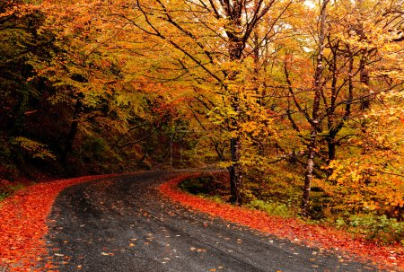 Photo for Autumn landscape with a beautiful road with colored trees - Royalty Free Image