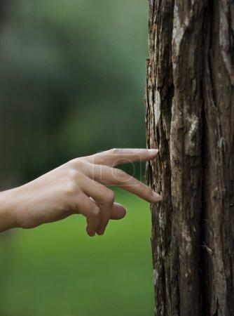 Photo pour Main de femme marchant sur un tronc d'arbre. Grand concept d'écologie - image libre de droit