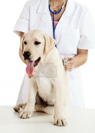 Veterinay taking care of a dog