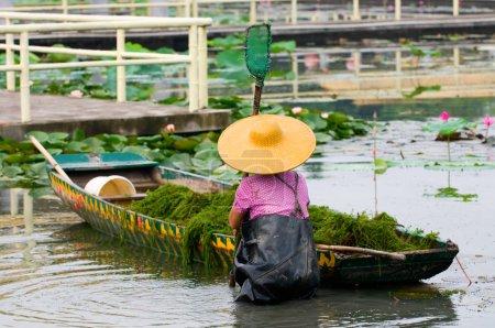 Photo pour Une femme avec chapeau travaillant dans la piscine de lotus - image libre de droit