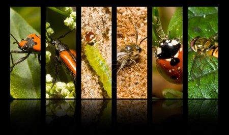 Photo pour Collecte d'insectes et d'autres invertébrés - image libre de droit