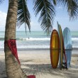 Surfboards under a palm tree on kuta beach bali indonesia with surfers riding ocean waves in background