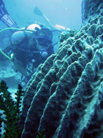 Barrell sponge