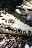 Krokodýl lebka