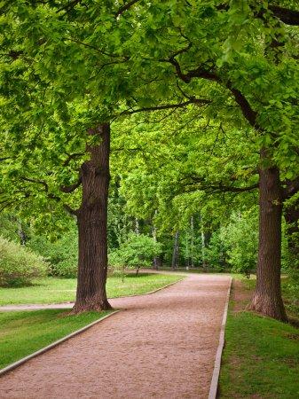 Photo pour Chemin dans le parc de Moscou - image libre de droit
