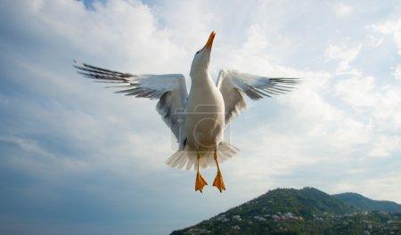 Photo pour Mouette survolant le ciel bleu, en Italie - image libre de droit