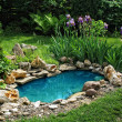Small pond on a summer day in the garden...