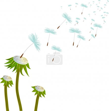 Vector two dandelion
