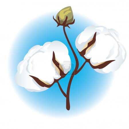 Illustration for Cotton branch. - Royalty Free Image