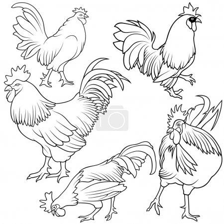 Illustration for Rooster Collection - Black outline illustration, vector - Royalty Free Image