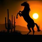 Постер, плакат: Mustang Sunset