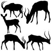 Antelope Silhouettes