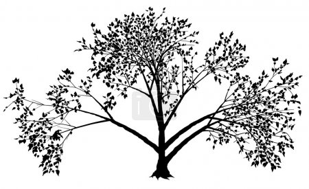 Illustration for Deciduous Tree - black silhouette, vector - Royalty Free Image