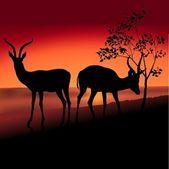 Dvě antilopy