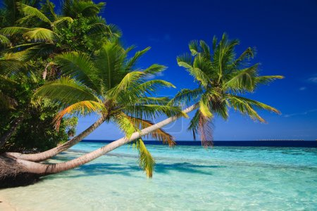 Foto de Paraíso tropical en Maldivas con palmeras y cielo azul - Imagen libre de derechos