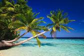 Tropical Paradise at Maldives