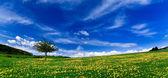 Spring landscape - green fields