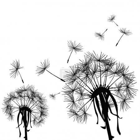 Black dandelions in the wind...