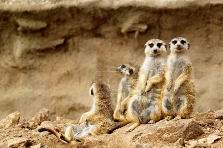 Photo for Family looking for visitors in ZOO - Royalty Free Image