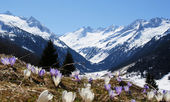 Springtime in mountain