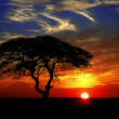 Beautiful african sunset with silhouetted acacia t...