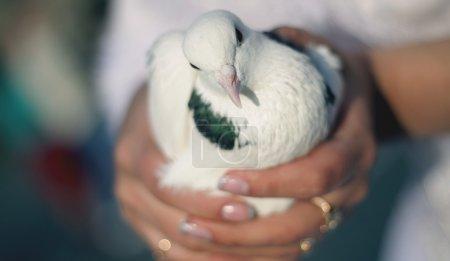Photo pour C'est une tradition de laisser les pigeons en l'air pendant que tu te maries, mariage - image libre de droit