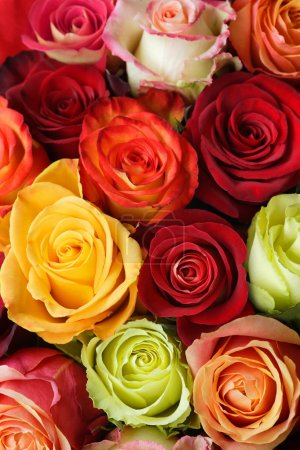 Photo for A bouquet of multi-coloured roses. Focus on middle roses. - Royalty Free Image
