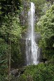 Straße nach Hana Wasserfall