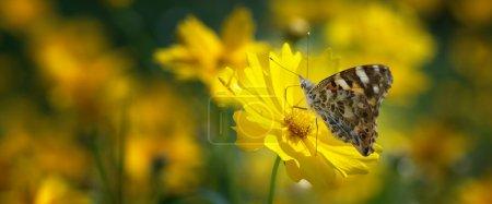 Photo pour Dame papillon peint sur prairie maman, journée ensoleillée d'été - image libre de droit