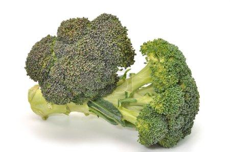 Photo for Fresh broccoli isolated on white background. - Royalty Free Image