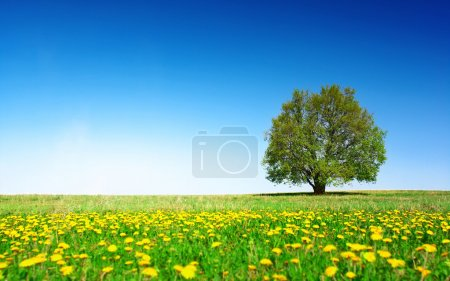 Photo for Green meadow with flowers and alone tree over clear blue sky background - Royalty Free Image