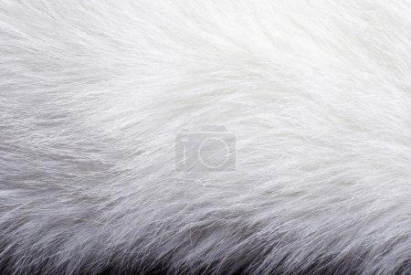 Closeup of white fur