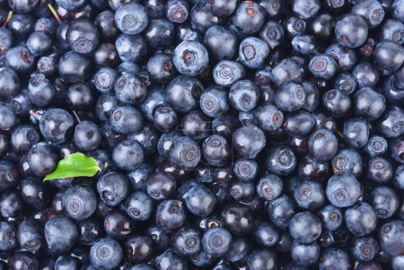 Sweet bilberries as a background