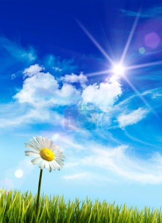 Wild daisy in the grass against bleu sky