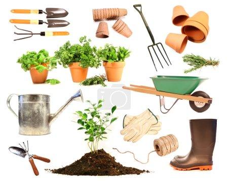 Foto de Variedad de objetos para la primavera siembra sobre fondo blanco - Imagen libre de derechos