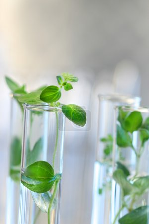 Photo for Test Tubes with small plants - Royalty Free Image