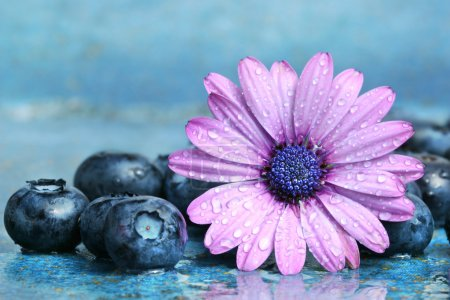 Photo for Blueberries and daisy on a aqua blue background - Royalty Free Image