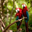 Colorful scarlet macaw perched on a branch...