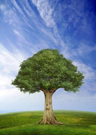 arbre debout seul dans un champ au ciel bleu, poisson oeil lentille horizon