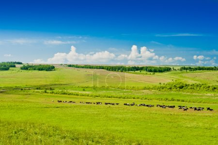Photo for Grazing cows on pasture, blue sky and clouds - Royalty Free Image