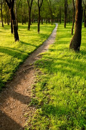 Photo for Path in the morning summer park - Royalty Free Image