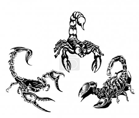 Illustration for Tattoo of the scorpions 3 Vector of is illustration - Royalty Free Image
