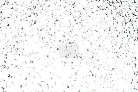 Rain Drops or dew