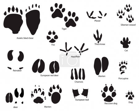 Illustration for Biggest collection of animal and bird trails with title - Royalty Free Image