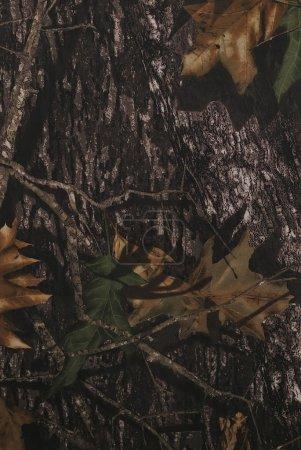 Foto de Tela de camuflaje bosque en una orientación vertical - Imagen libre de derechos