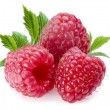 Raspberries; Objects on white background...