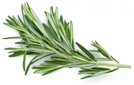 Photo for Rosemary. Isolated on a white background. - Royalty Free Image