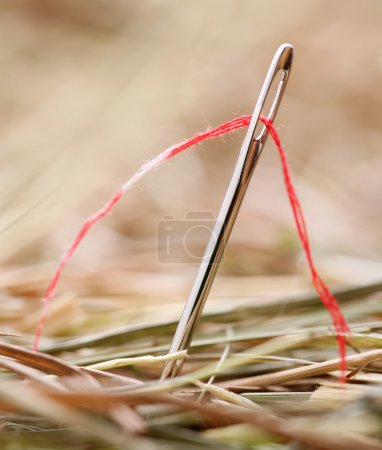 Photo for Needle with a red thread in a haystack - Royalty Free Image